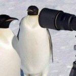 【速報】ペンギンに「宇宙人の可能性」が浮上!その理由がガチでヤバすぎる…