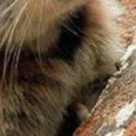 【お宝画像】世界に数百頭しかいない「幻の動物」がいくらなんでも可愛すぎる!