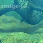 【画像】かつて地球に存在した史上最大の魚竜「ショニサウルス」が怖すぎる…
